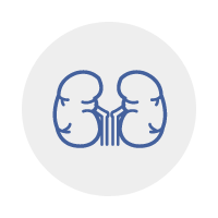 Division of Nephrology icon